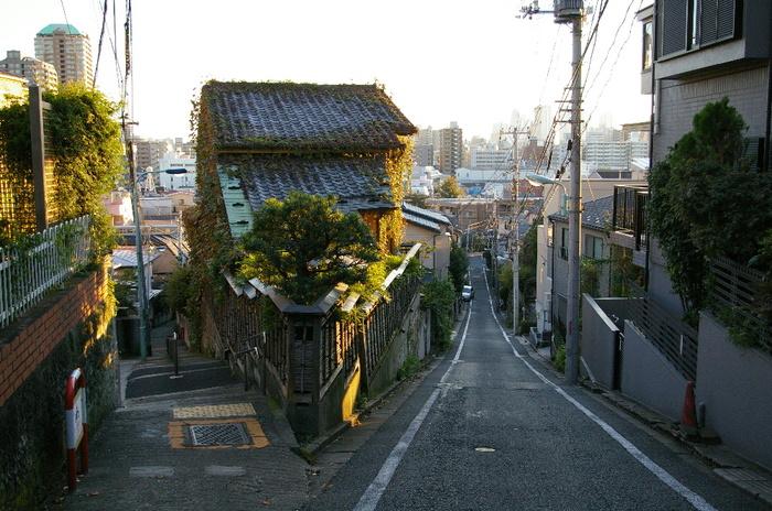 20081101mejirodai_0321000_2