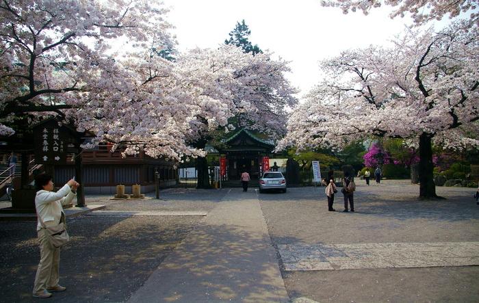 20090408kawagoe_sakura_027